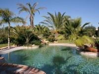 Bassin piscine naturelle