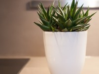 Décoration avec plante verte