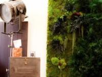 Mur végétal du cabinet médical - Psychologue