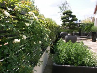 Panneaux en bois noir habillés de plantes grimpantes
