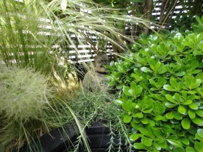 Plantes en Terrasse