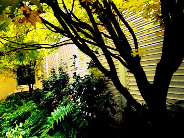 Sélection de plantes vertes et d'arbres