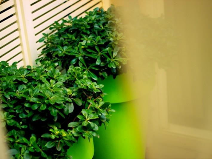 Terrasse aménagée avec de gros pots de couleur verte