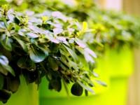 Vue sur les pots de couleur verte