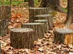 La demande d'autorisation de coupe ou d'abattage d'arbres