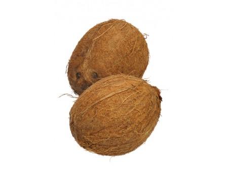 La fibre de coco : caractéristiques et conseils d'utilisation