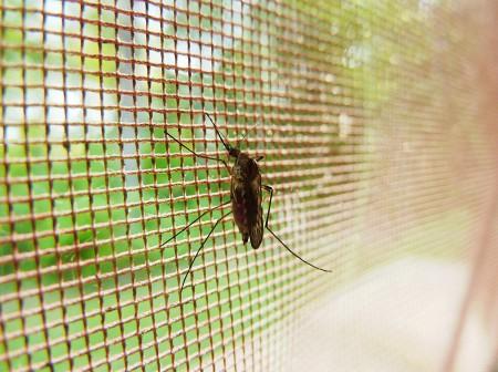 Equiper son logement d'une moustiquaire pour fenêtre pour un été tranquille