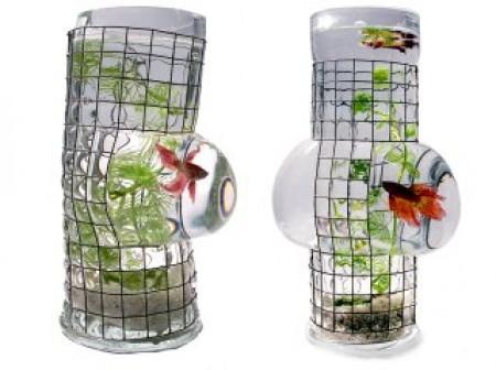 Le vase aquarium de Vanessa Mitrani