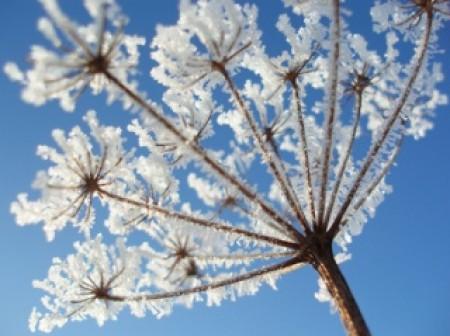 Jardiner en hiver