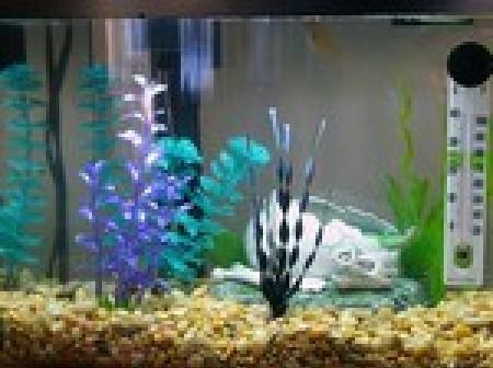 Eclairage de l'aquarium