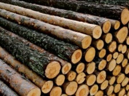 10 bonnes raisons de se mettre au bois