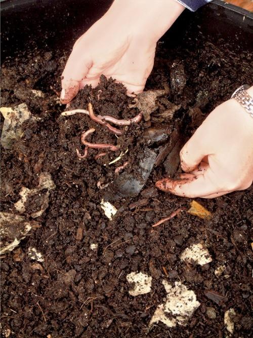 vermicomposteur les vers et le compost rencontre avec un pro id. Black Bedroom Furniture Sets. Home Design Ideas